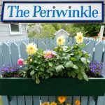 The Periwinkle